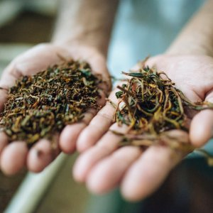 Authentic Indian Tea